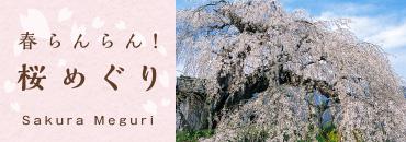 春らんらん_桜めぐり