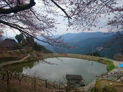 桜情報 4.1