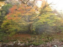小田深山渓谷の紅葉情報