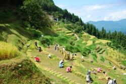 農作業体験ツアー2017「棚田オーナー」募集開始!