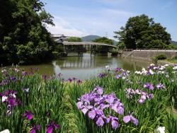 菖蒲と屋根付き橋の風景