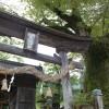 広瀬神社 イチイガシとケヤキ
