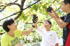 観光農園で果物狩り