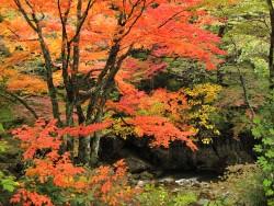 11/11開催!小田深山紅葉ライド2018              ~自転車で気軽に楽しむ紅葉めぐりとおもてなし~