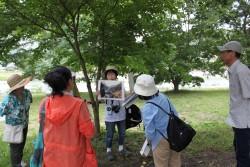 11/24、11/28内子ねき歩き「和紙の里いかざきコース」を開催!