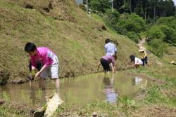 5/1泉谷の棚田田植え体験参加者を募集しています