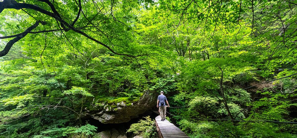 新緑の小田深山渓谷