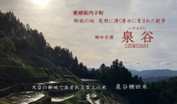【完売しました】「泉谷棚田米」予約開始!