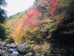 小田深山紅葉情報 (11/20現在)