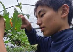 「内子町ふるさと農援隊」農作業ボランティア募集中止のお知らせ