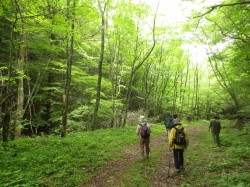 熱い夏!涼しい自然に包まれましょう 朝の森ウォーク